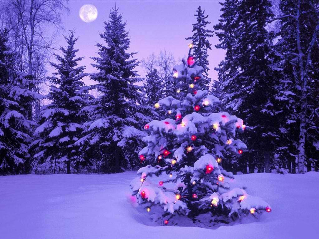 Les types de sapins de Noël dans Loisirs foret-enneige-avec-boules-de-noel